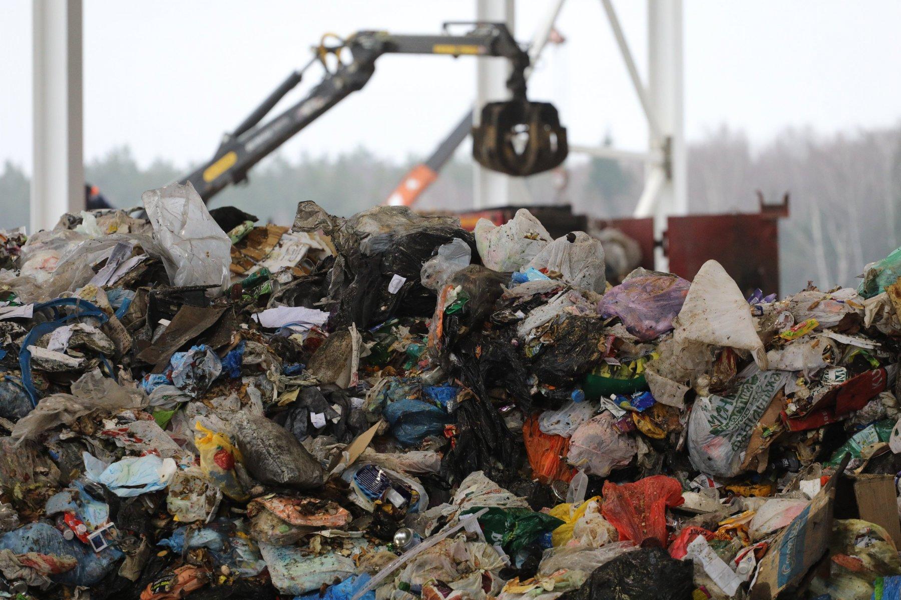 20 тысяч кубометров мусора вывезено из лесов Московской области в этом году