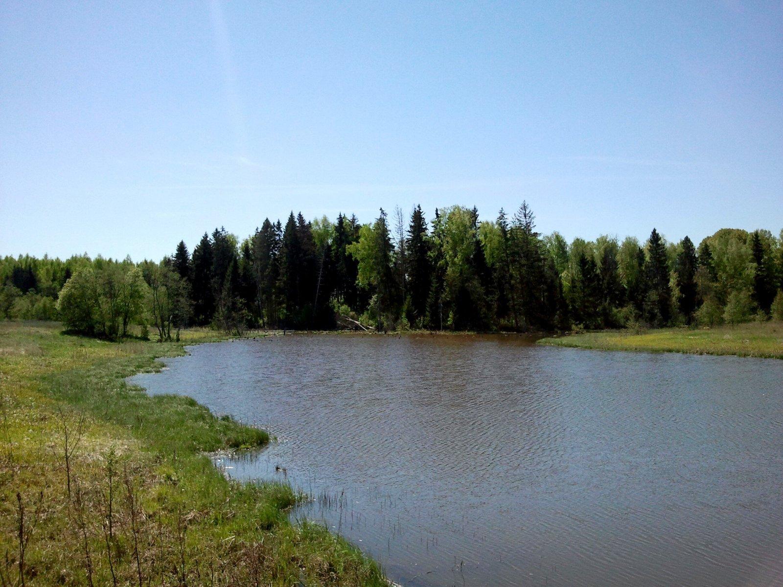 Летом в Подмосковных лесах заблудились 358 человек